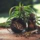 Cannabis Öl – Test und Erfahrungen